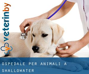 Ospedale per animali a Shallowater