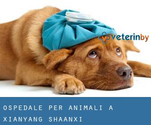 Ospedale per animali a Xianyang (Shaanxi)