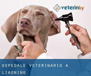 Ospedale Veterinario a Liaoning