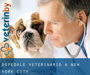 Ospedale Veterinario a New York City