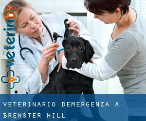 Veterinario d'Emergenza a Brewster Hill