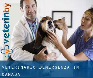 Veterinario d'Emergenza in Canada