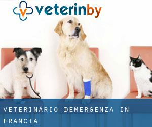 Veterinario d'Emergenza in Francia