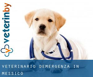 Veterinario d'Emergenza in Messico