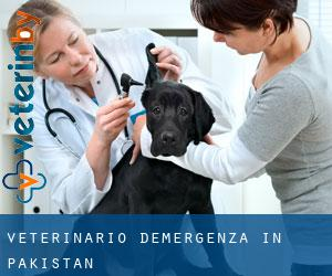 Veterinario d'Emergenza in Pakistan