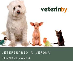 Veterinario a Verona (Pennsylvania)