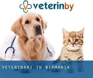 Veterinari in Birmania