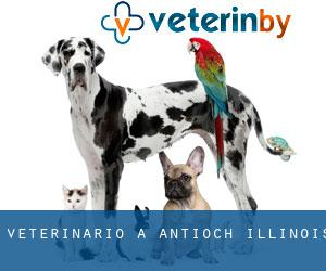 Veterinario a Antioch (Illinois)