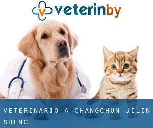 Veterinario a Changchun (Jilin Sheng)