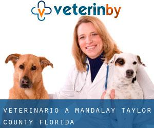 veterinario a Mandalay (Taylor County, Florida)