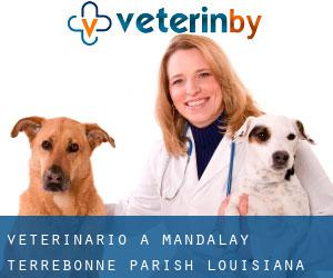 veterinario a Mandalay (Terrebonne Parish, Louisiana)