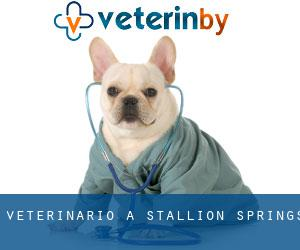 Veterinario a Stallion Springs