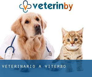 Veterinario a Viterbo