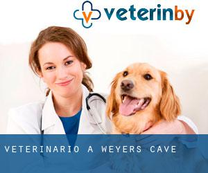 Veterinario a Weyers Cave