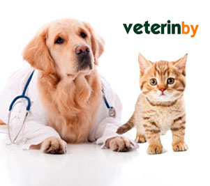 Clinica veterinaria a Sells